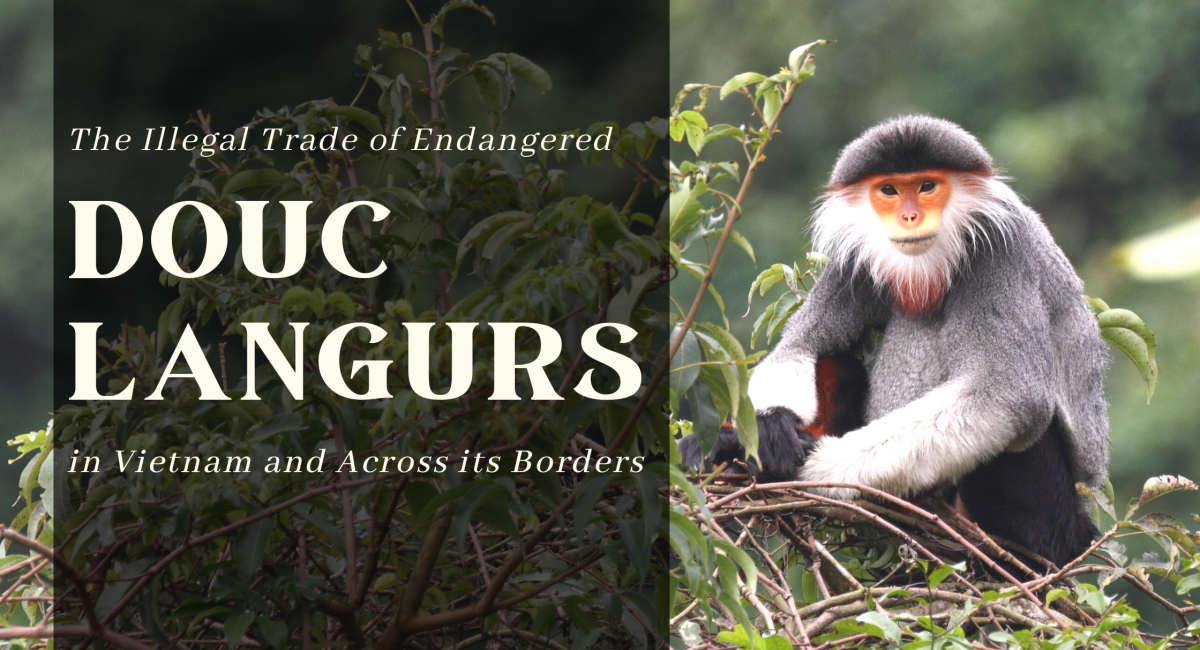The-Illegal-Trade-of-Endangered-in-Vietnam-and-Across-its-Borders-2